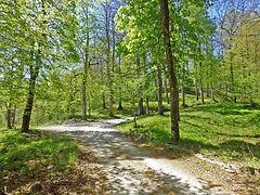 Road to Villa Morelli Gualtierotti