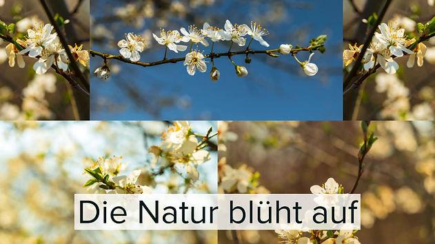 Die Blüten spießen, die Vögel zwitschern, die Bienen summen und die Sonne lacht wieder vom Himmel - das ist meine Lieblingsjahreszeit: der Frühling. Genieße mit mir gemeinsam meine schönsten Frühlingsbilder der letzten Wochen.