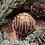 Thumbnail: S'mores Hot Cocoa Bomb
