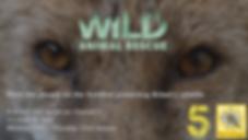 thumbnail_WILD_ ANIMAL RESCUE TX CARD v5