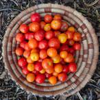 Arizona grown tomatoes!