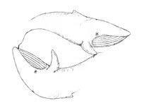 Sketch - Escher-esque whales draw each other