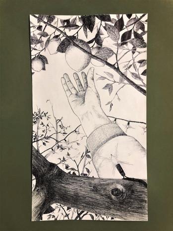 Picking from the lemon grove
