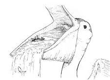Cosmic Pelican sketch Tim Rotolo.jpg