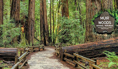 Muir Woods National Monument.jpg