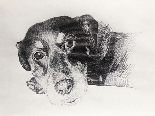 Ink sketch of Topper