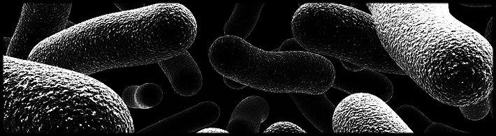 klimaatverandering, bacterie en olivijn