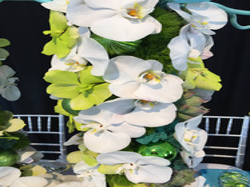 orchids white green las vegas