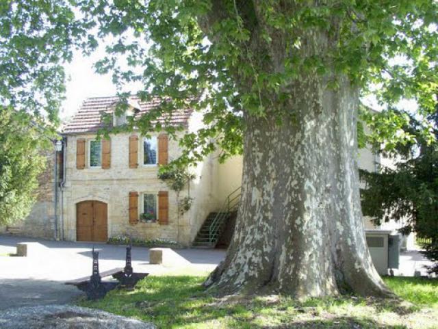 Le platane plusieurs fois centenaire de la place du village.