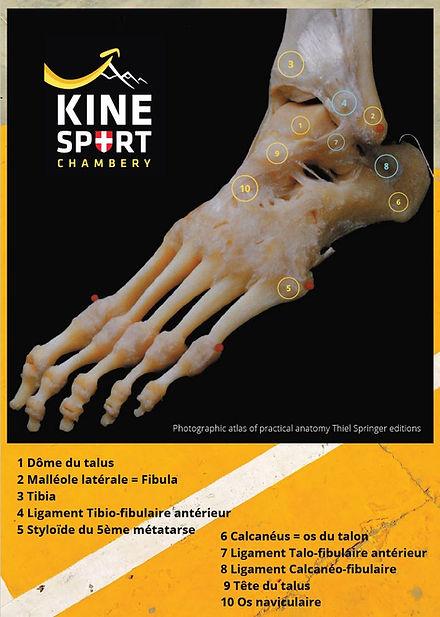 pdf anatomy cheville.JPG