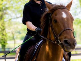 OB-EN Student Scores at Nassau BOCES Horse Show