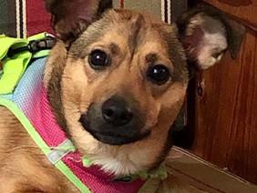 Pet Adoption Clinic in Glen Cove