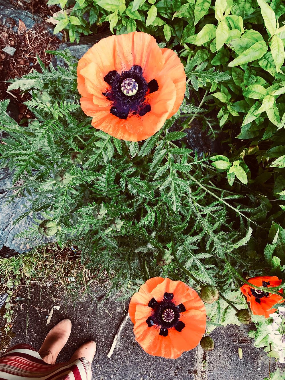 flowers in Ketchikan