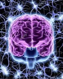 frontal lobe.jpg