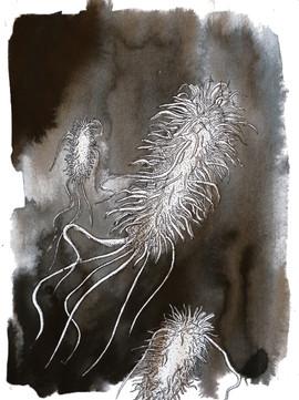 Bactérie du colon