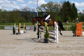 Münsingen - Pferdesporttage