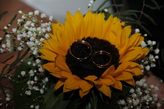 Trauringe in Sonnenblume (Foto: Regula Kormann)
