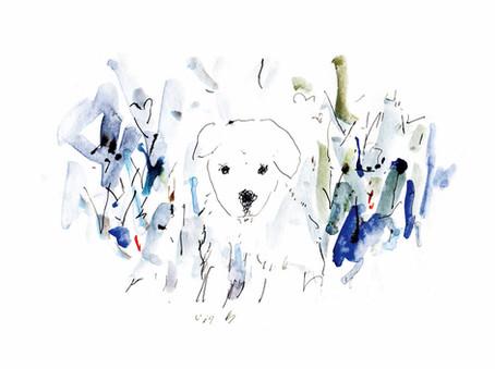 ペットショップから犬を迎えるということ 挿画