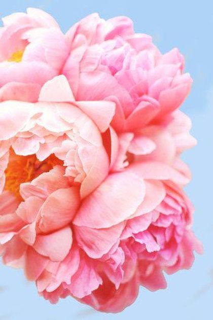 Pink Picasso Kits, Perfect Petals