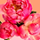 Thumbnail: Pink Picasso Kits, Petal Power