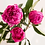 Thumbnail: Pink Picasso, Fantastic Fuchsia