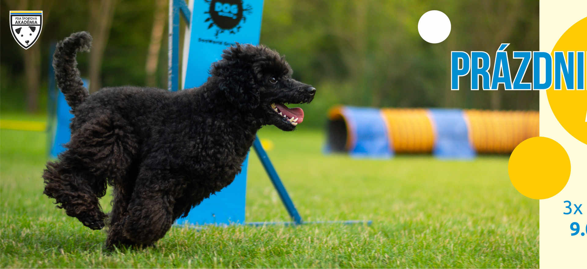 """🥳Pripravili sme pre vás letnú akciu doobedných tréningov 🥳  Tréningy su vhodné pre každého, tímom sa venujeme individuálne, pracujeme na tom, čo práve potrebujete - jednotlivé prekážky (slalom, zóny,...), handling, či pomôžeme zlepšiť drive psíkov na prekážkach. 🐾🐾🐾  Na tréningy sa môžte prihlásiť cez dogres na tréningy s názvom """"Prázdniny"""" a do poznámky prosíme napísať vašu úroveň a prípadne to, na čom by ste chceli na tréningu popracovať.  Pomôže nám to vopred si nachystať tréning priamo pre vás a vášho psíka.  Cena jedného 2h tréningu je 10€, ak si predplatíte tréningy na celé leto (10 tréningov) máte jeden tréning gratis 😎  Tréningy začínajú o 9,00 ( prípadne po dohode aj skôr) a po tréningu sa stihnete osviežiť v neďalekom Bukovci 👙(10 min autom) ešte pred návalom ľudí  🏖  Začíname od 13.07. a akcia trvá celé prázdniny!   V prípade záujmu hlavne začiatočníkov, je možné otvoriť aj ďalší doobedný začiatočnícky kurz."""
