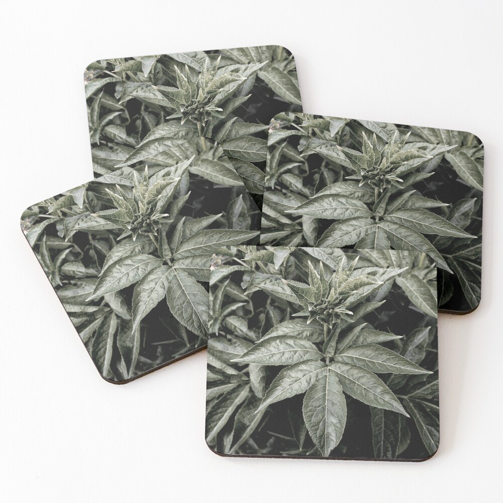 work-48081531-coasters-(set-of-4) copy.j