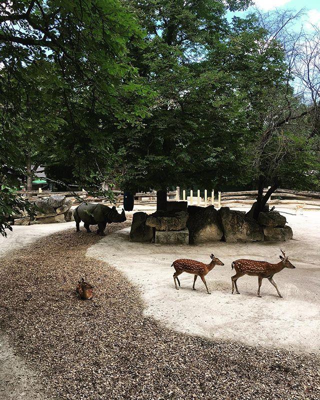 #zoo #vienna #deer #rhino #zoovienna #an