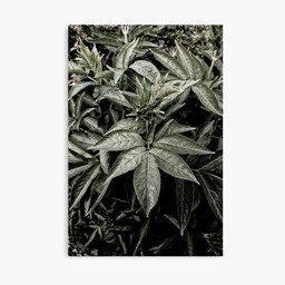 work-48081531-canvas-print.jpg
