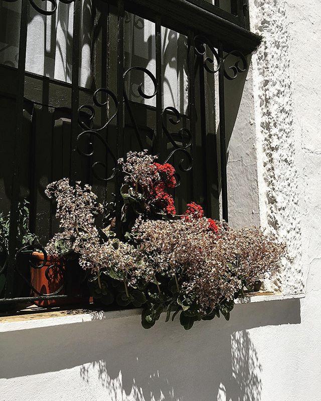 #floral #garden_styles #vejer #vejerdela