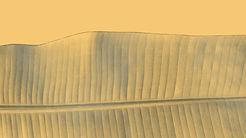 leaf01_edited.jpg