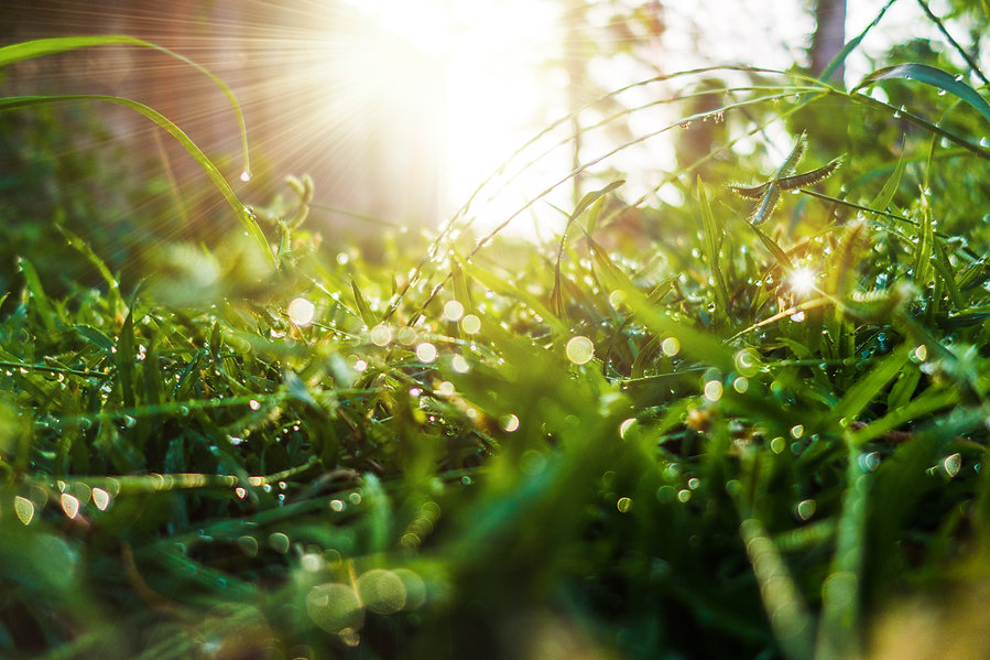 grass-dew-green-refreshing-light-morning