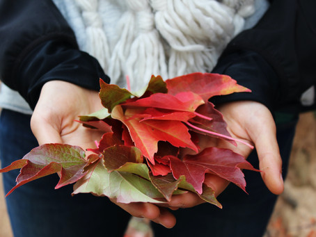 3 Reasons To Have An Intentional Fall Stewardship Campaign