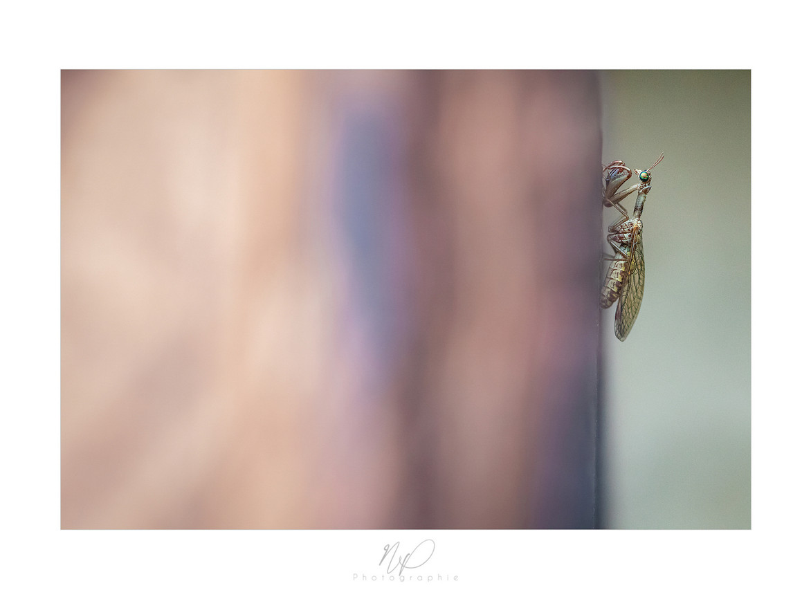 Mantispe