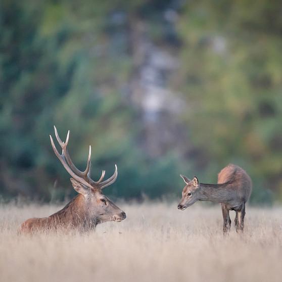Le Roi et le Prince