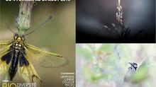 Concours Camera Natura 2019