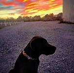 shasta bisordi of fulton california from ukiah 2019