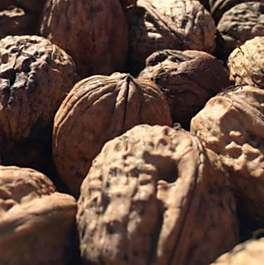 bisordi ranch walnuts