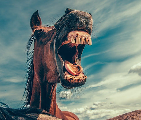 horse-868971_1920_edited.jpg