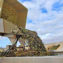 olive press 1.jpg