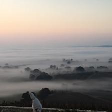 Foggy mornning
