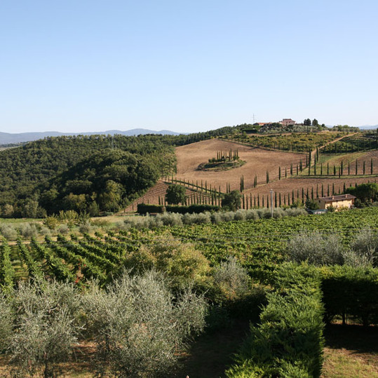 Vineyards Italy