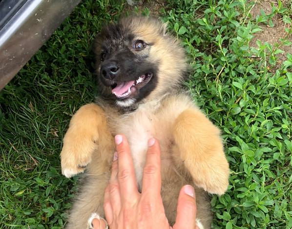 Bauch kraulen - auch bosnischen Hunden gefällt das