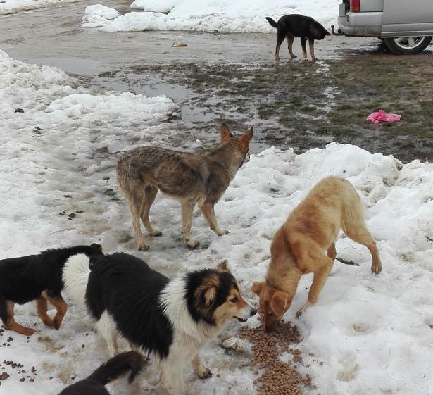 Vorallem im Winter besonders wichtig, dass die Hunde genügend zu Fressen bekommen.