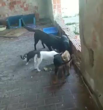 Versorgung der Hunde in einer alten Ruine