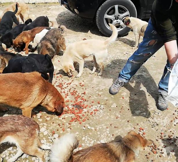 Fütterung der Hunde vor dem Shelter