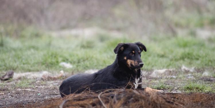 Überall liegt Material welches gefährlich für die Hunde werden kann. Hier liegen alte Drahtseile herum