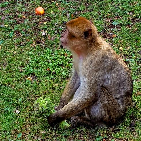 Homosexualität im Tierreich - Ein Streifzug durch den Tiergarten