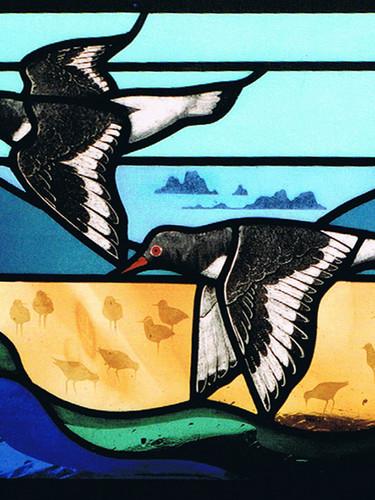 Oystercatcher window