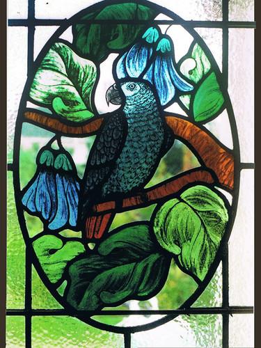 Grey Parrot window.